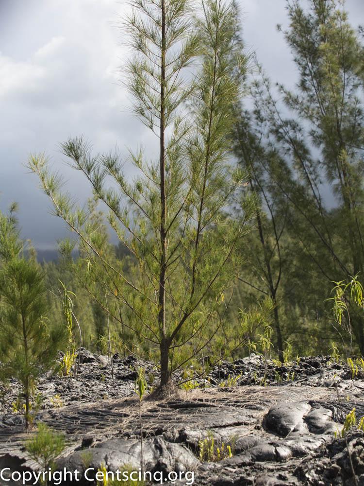 Ile de la Réunion-68